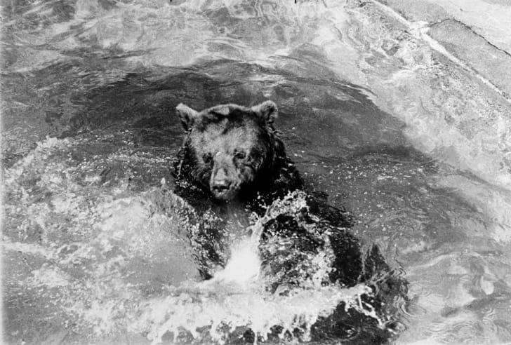 Smokey Bear takes a bath at the National Zoo