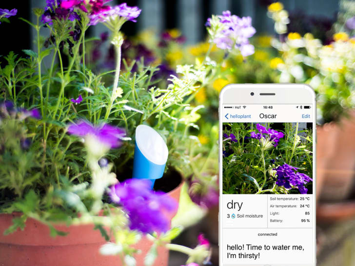 A blue sensor is placed in a pot of purple flowers next to a phone with the HelloPlant app open.
