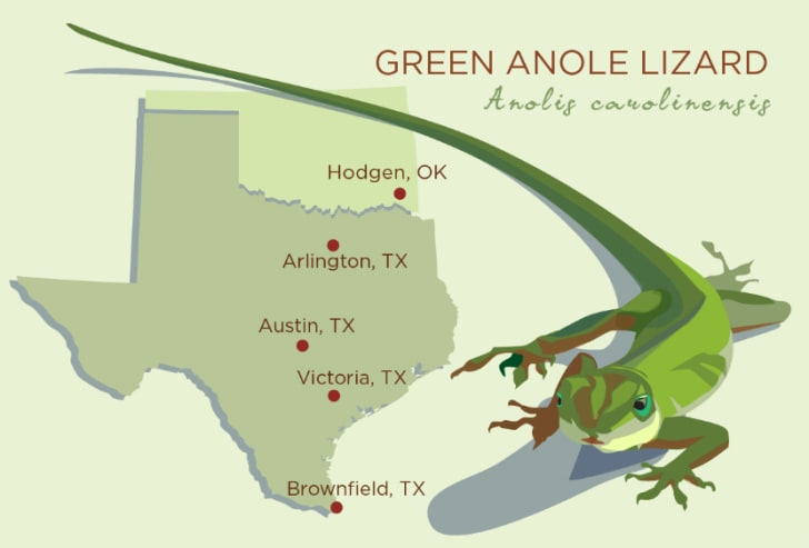 Map of the geographic range of the green anole.
