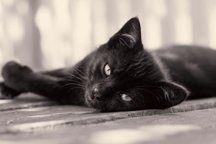 Black cat facts.
