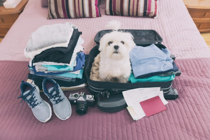 Small dog sitting in a packed suitcase.
