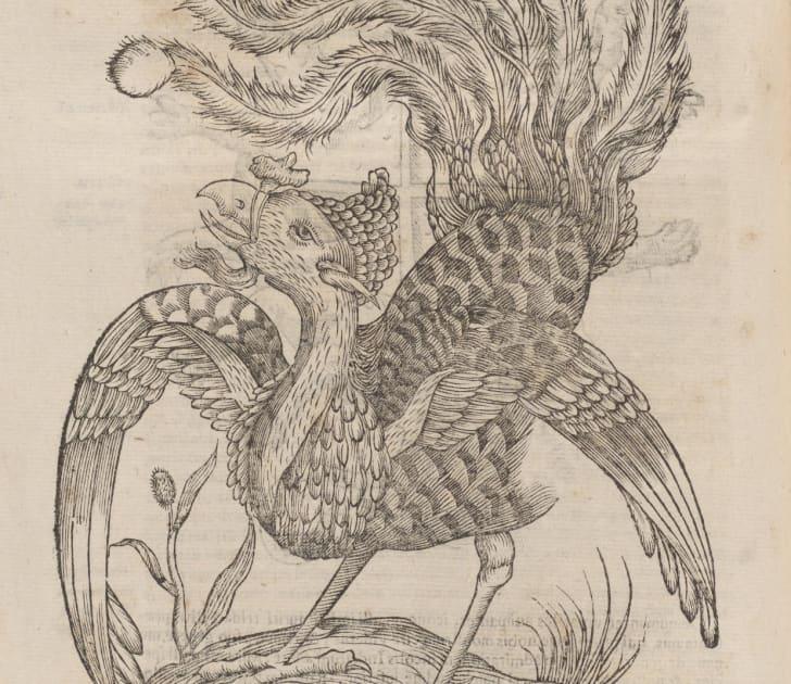 Illustration of a phoenix.