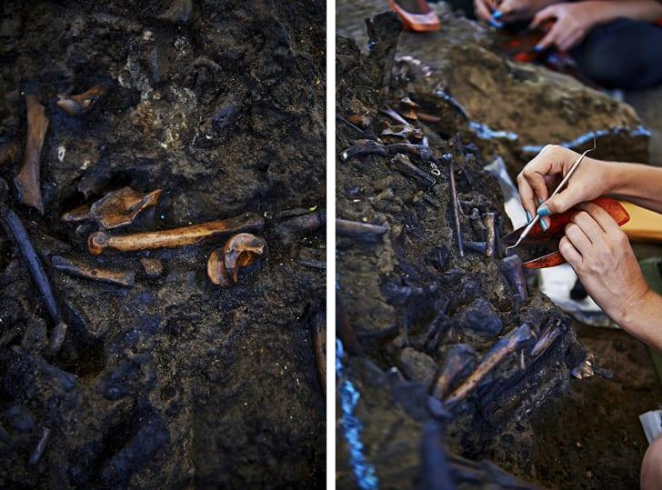 paleontologists working on bones