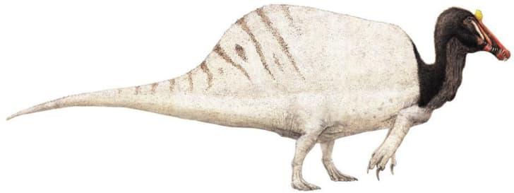 A drawing of a Spinosaurus.