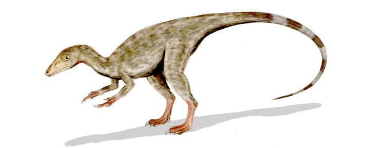 A feathered version of a Compsognathus.