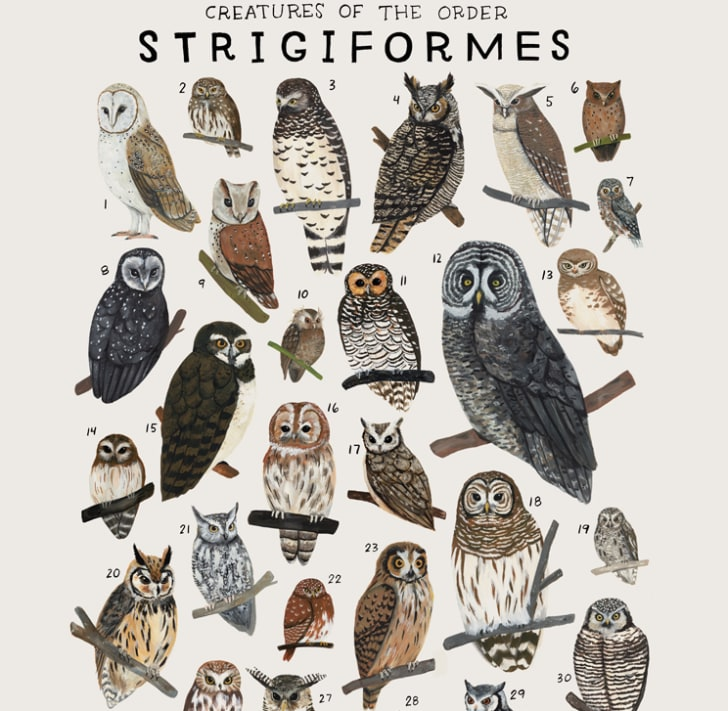 Poster features owls of the animal kingdom.