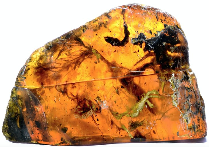 Researchers recently discovered a fossilized baby bird that lived about 99 million years ago, preserved inside a piece of amber.