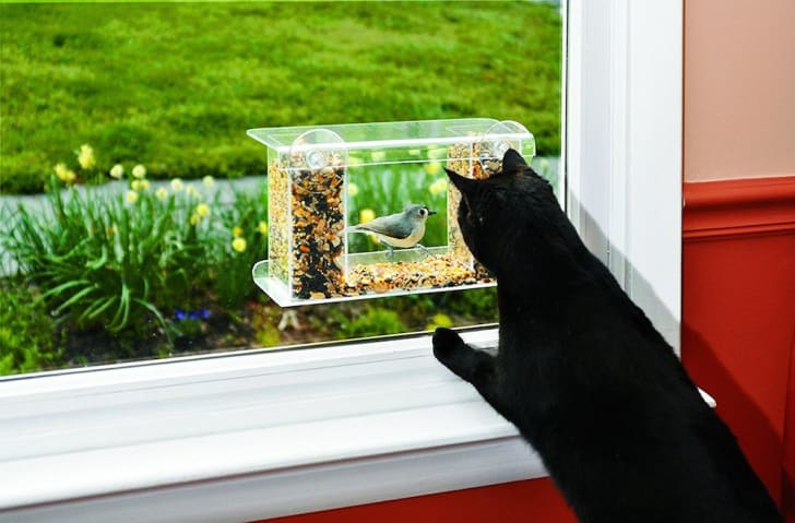 Cat looks at bird feeder through window.