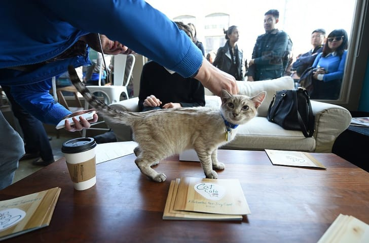 Visitors play with a cat at the pop-up Cat Cafe
