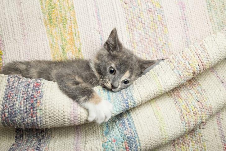 Gray kitten playing on a mat.