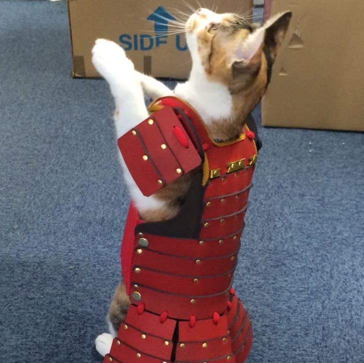 Cat in red samurai armor.