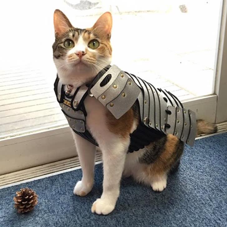 Cat in silver samurai armor in front of door.