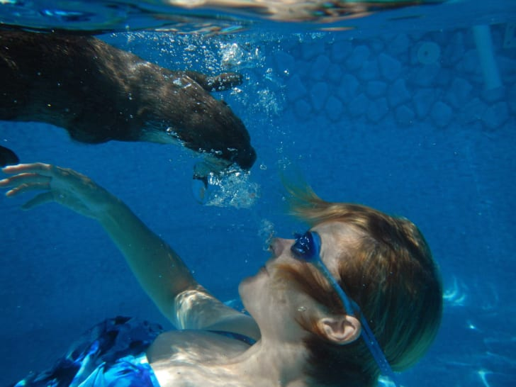 Woman swimming underwater with an Otter