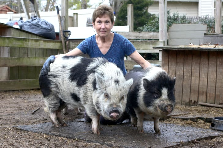 Janice Skura with two of her pigs