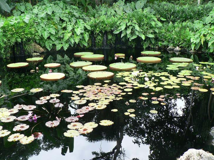 Conheça 10 dos jardins públicos mais lindos do mundo