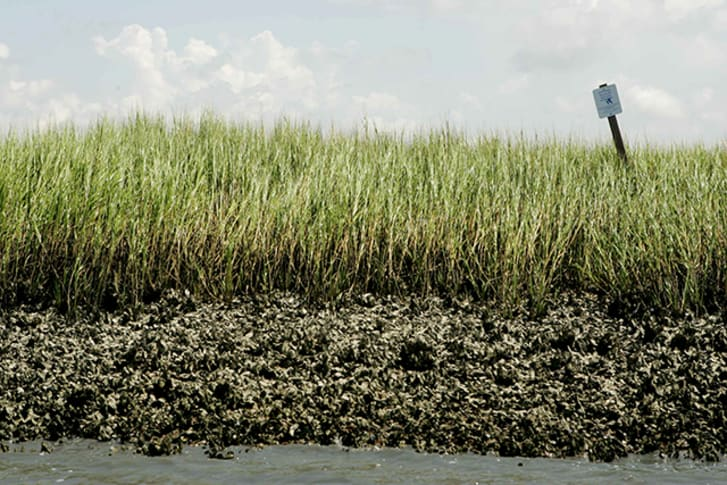 Marsh grass and oyster beds