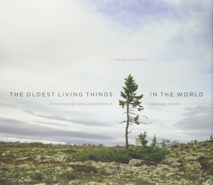 The Oldest Living Things book