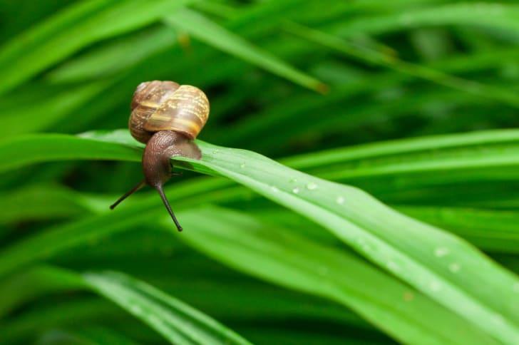 Close up of a snail on a leaf
