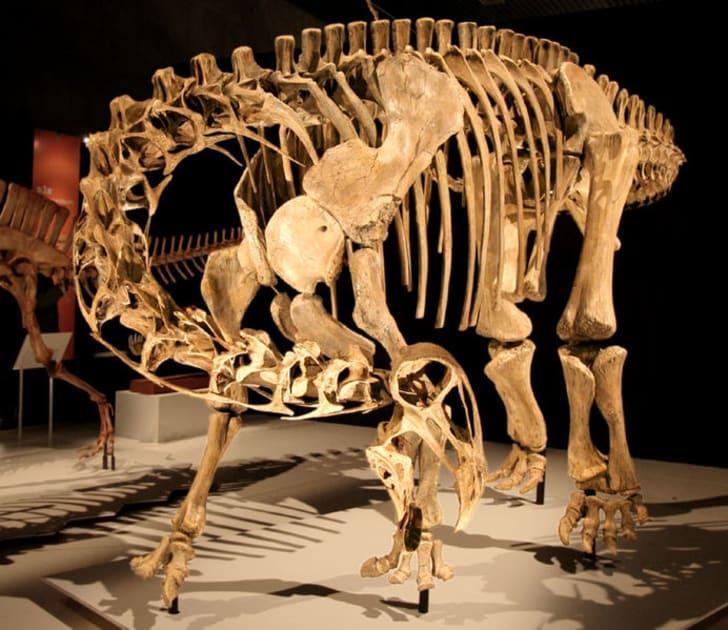 10 Fun Facts About Nigersaurus | Mental Floss