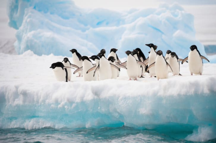 A group of penguins on an iceberg.