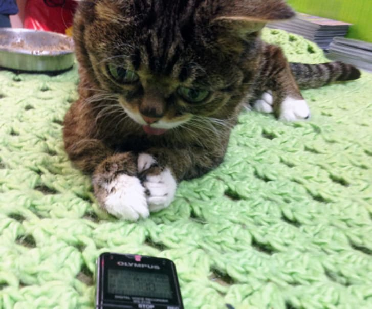 Lil Bub on her green blanket