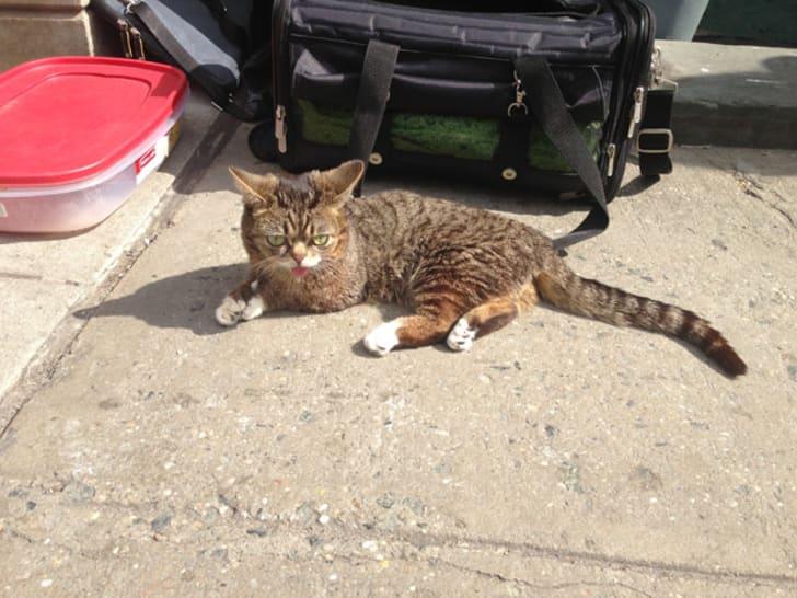 Lil Bub outside Social Tees Animal Rescue