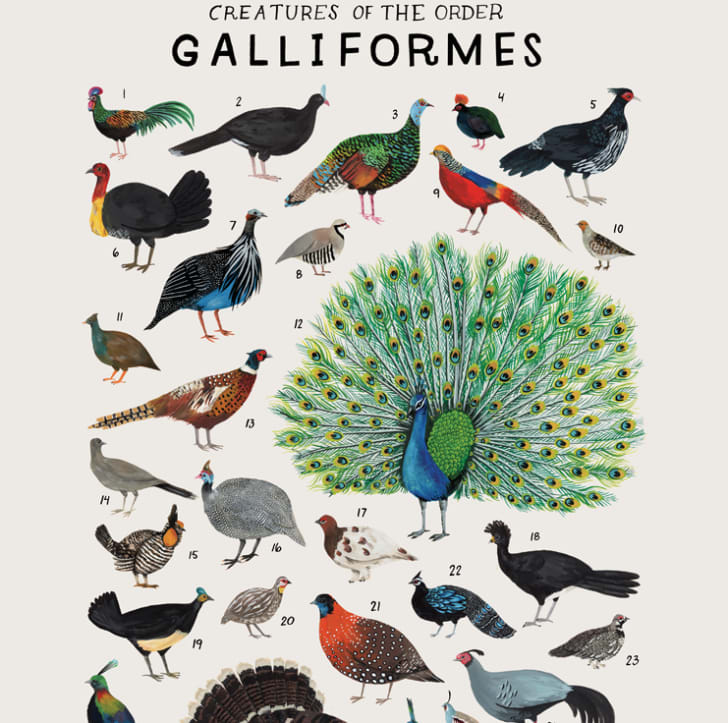 Poster featuring birds from the animal kingdom.
