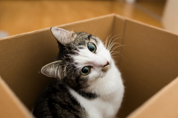 10 Scientific Benefits Of Being A Cat Owner Mental Floss