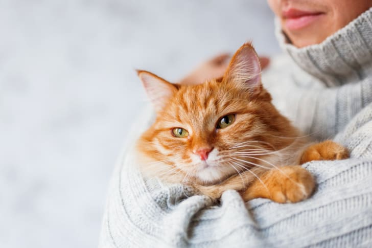 10 Scientific Benefits of Being a Cat Owner | Mental Floss