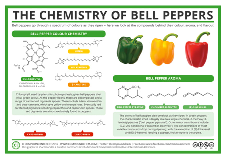 Difference Between Red And Green Peppers
