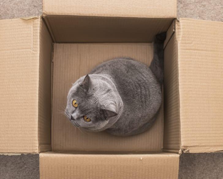 gray cat in a cardboard box