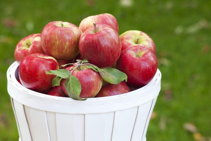 basket of honeycrisp apples