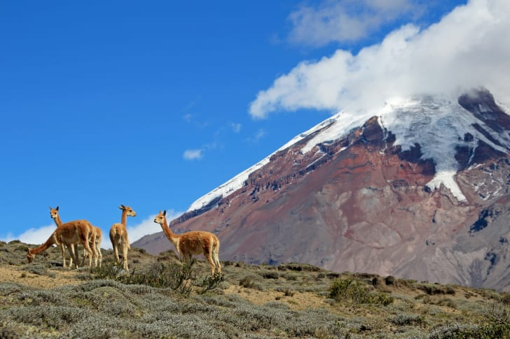 An image of Ecuador's Mount Chimborazo