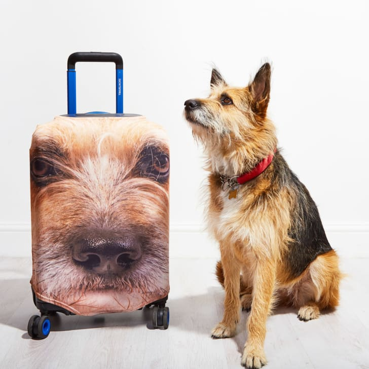 Dog next to luggage with dog's face on it.