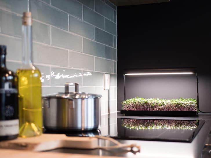 MicroFarm indoor garden on a kitchen counter