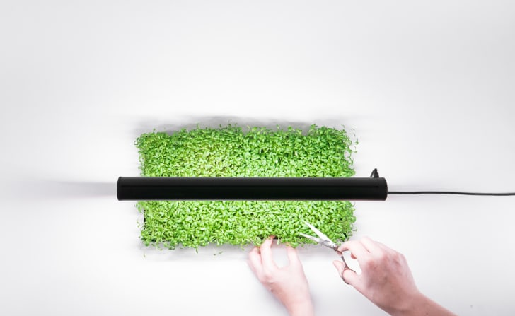 A person harvesting microgreens from the MicroFarm indoor garden, seen from above