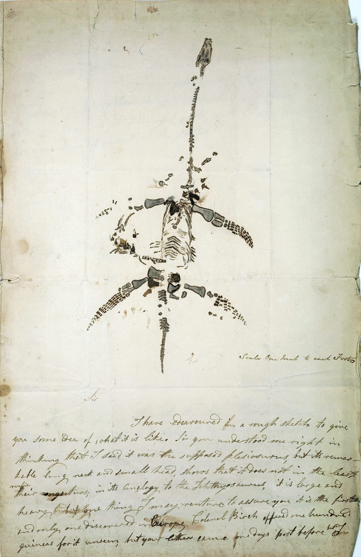 An 1823 letter by Mary Anning describing her discovery of what would be identified as a Plesiosaurus.