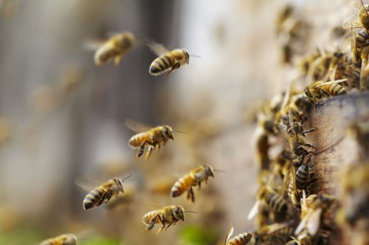 bees flying to a hive