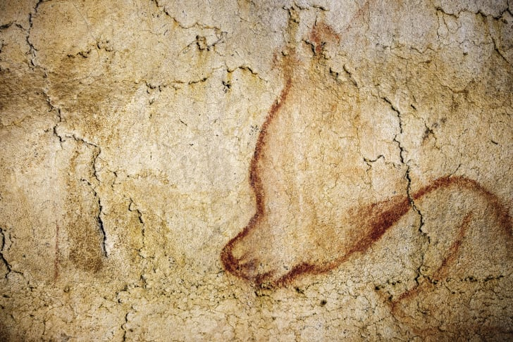 Outline of a cave bear head in Chauvet Cave