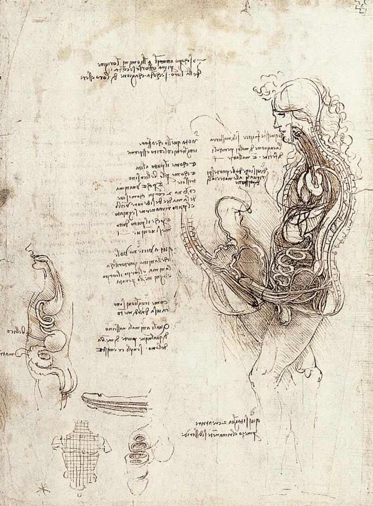 An anatomical sketch