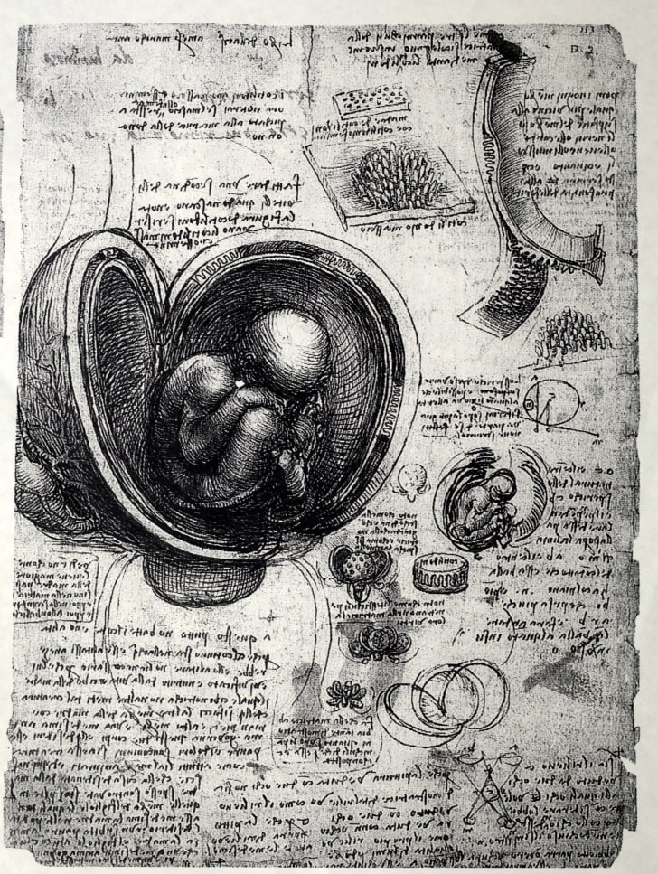 Anatomical drawing of a fetus in the womb by Leonardo da Vinci.