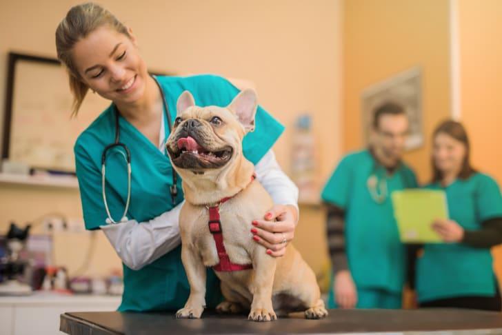 Dog at the vet.