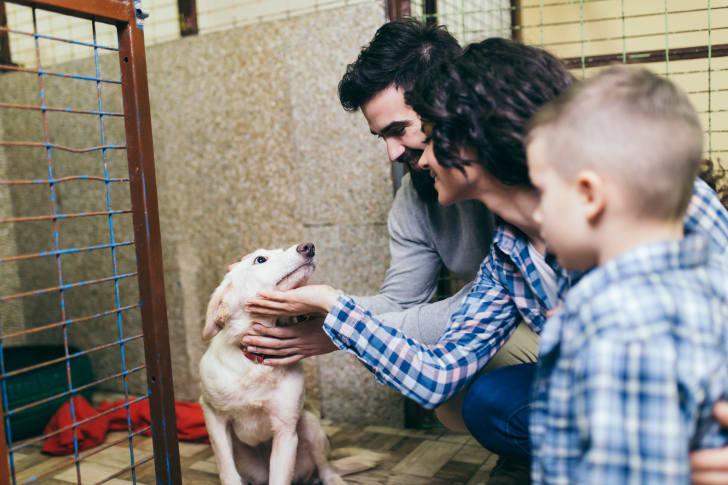 Dog meeting family at shelter.
