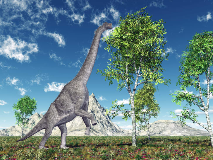 image of a brachiosaurus eating leaves from a tree