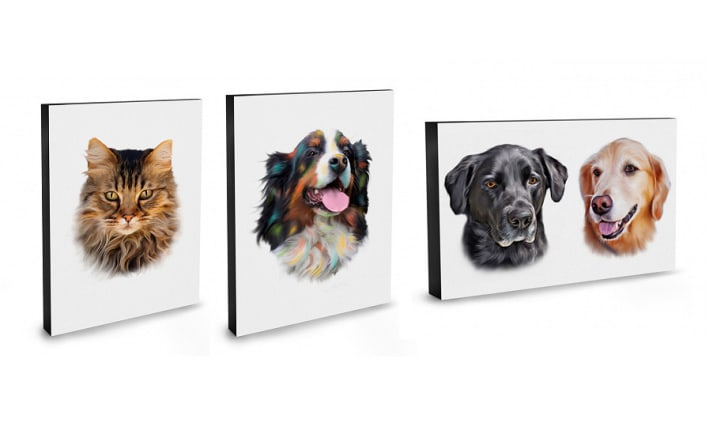 Three pet portraits