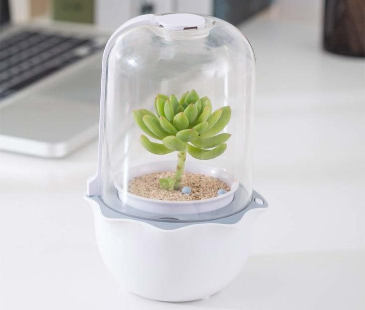A succulent planter