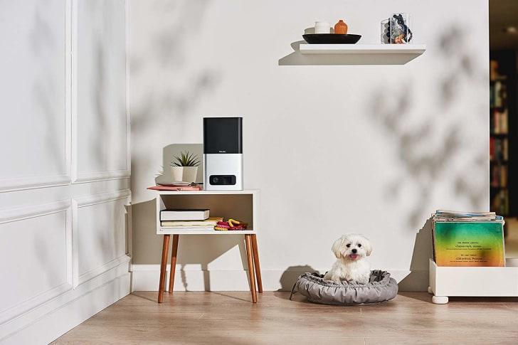 A Petcub pet cam on a table