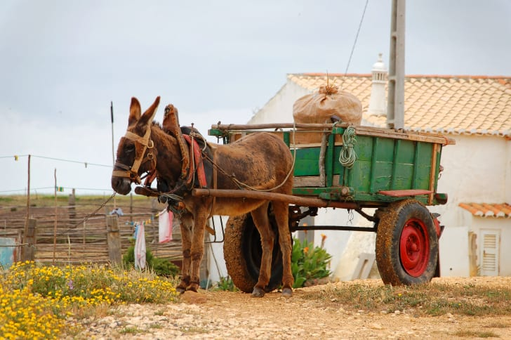 A donkey in front of a green cart that has a sack in it