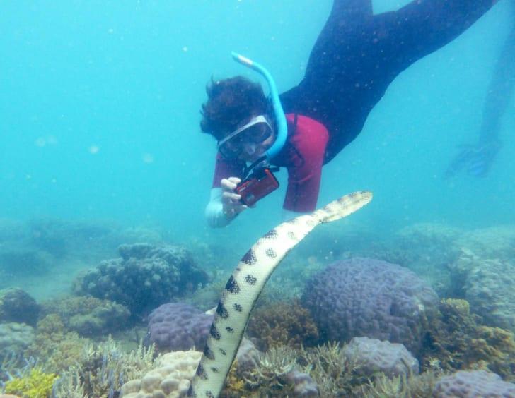 snorkeling grandma photographs sea snake