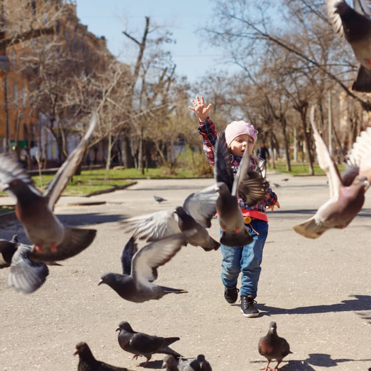 A little girl feeds pigeons in the park